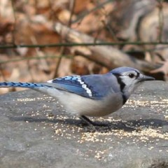 Bird Seed: Jays Want No Part of #Tanakafest, Kershaw Extended, Bye-Bye A-Rod